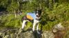7Astral Birddog blue_akce_3.jpg